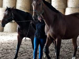 frau lässt sich vom pferd besteigen